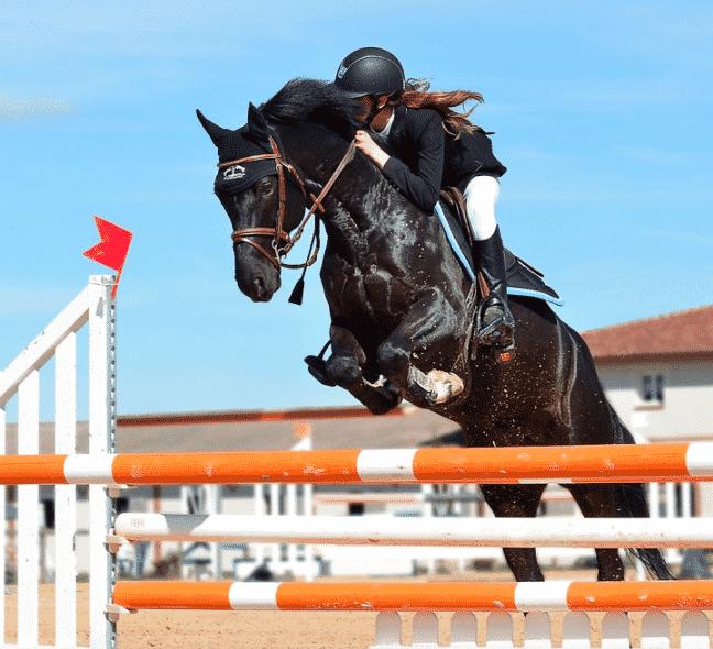 SFR Sport s'enrichit des droits de diffusion des concours équestres.